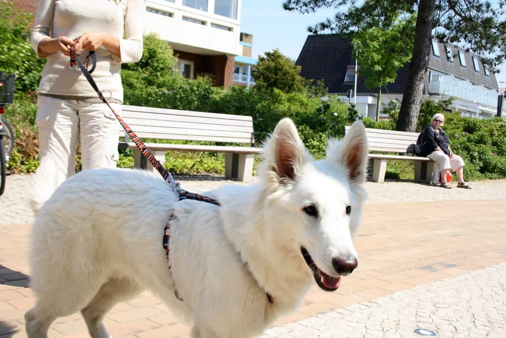 St. Peter-Ording Ferienwohnung Hund im Kurgebiet