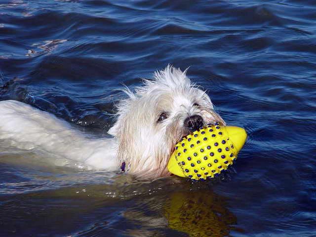 St. Peter-Ording Ferienwohnung Hund: Apollo in der Nordsee