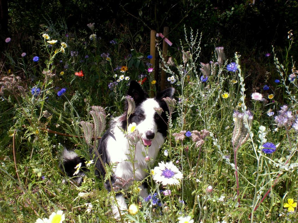 St. Peter-Ording Ferienwohnung Hund auf der Wiese